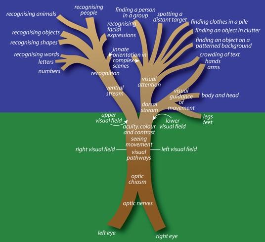 DSD Tree