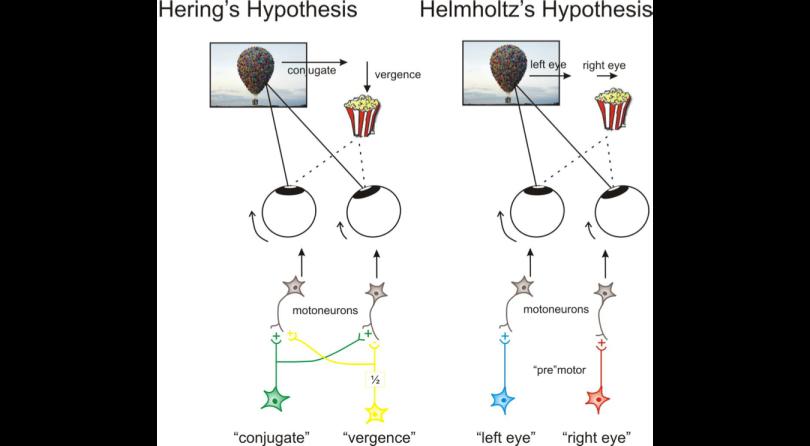 Helmholtz Hypothesis