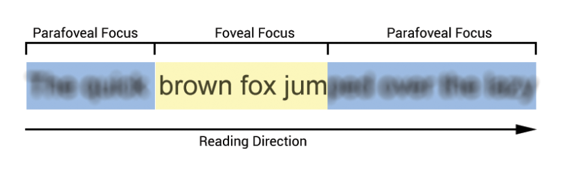 Foveal_and_Parafoveal_Focus