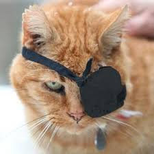 cat with eye patch
