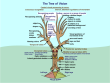 Tree of Vision - Dutton
