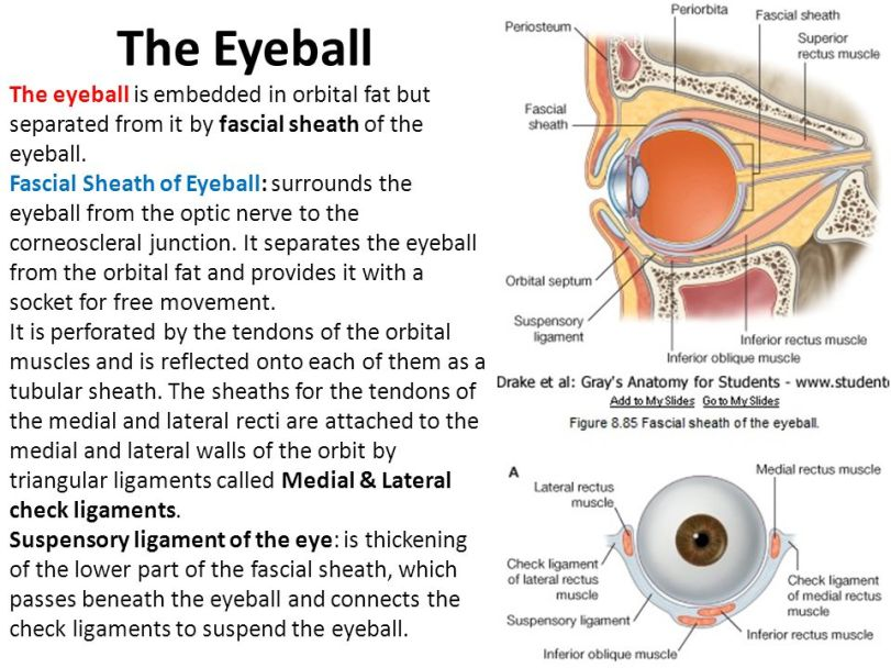 Eyeball Fat
