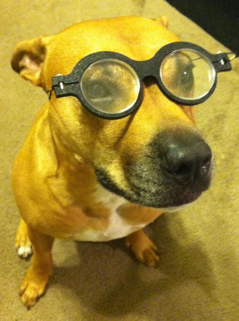 Yoked Prism Dog